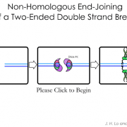 Non-Homologous End Joining